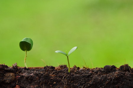 seedling plant  growing from the ground ,concept for business grow