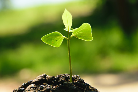 strong seedling growing in the center trunk tree as a Concept of support building a future.. (focus on new life ) Stock Photo