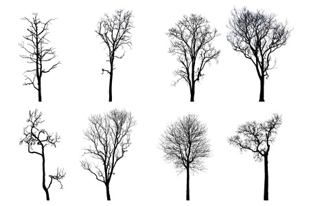 Collection of dead tree silhouette. dry tree without leaves isolated on white photo