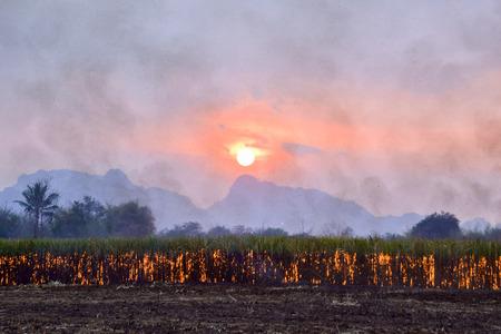 burning bush: Blurred Sugar cane burning,dust pollution ,Air pollution
