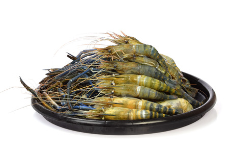 macrobrachium: Giant freshwater prawn, Fresh shrimp in disk  on white background Stock Photo