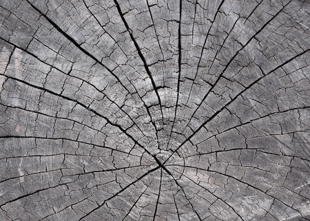 timber: Timber crack, for background design or  texture