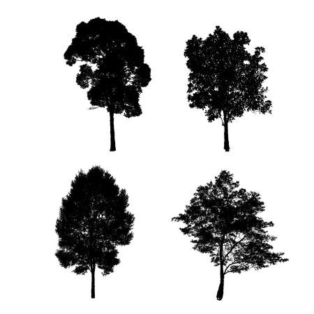 Silueta del árbol aislante en blanco Foto de archivo - 41129524