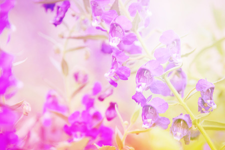 colorize: beautiful flowers with Soft Focus Color Filtered effect
