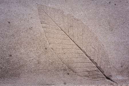fossilized: The Imprint of leaf on cement ground Stock Photo