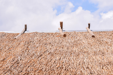 imperata: Thatched roof (Roof from  Imperata cylindrica Beauv.)