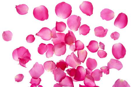 白い背景の上にバラの花びら
