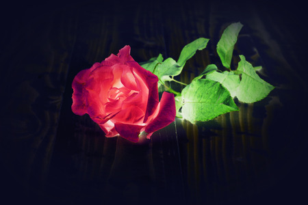 Red rose negative tone effect Stock Photo