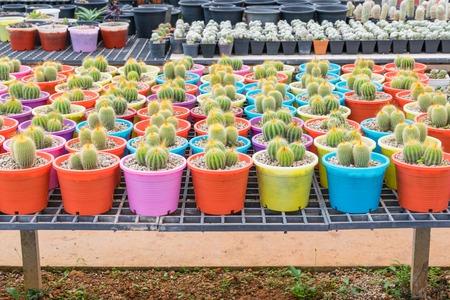 botanical farms: Small Cactus plant nurseries in farm -selected focus