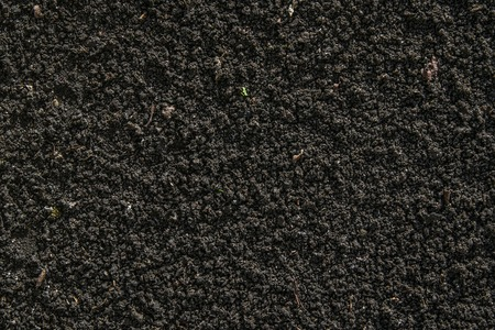 soil texture: Black soil texture with small plants  germinated Stock Photo