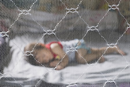 Child sleeping under mosquito net ,provides mosquito nets to protect evacuees from dengue fever