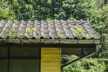 arbol de problemas: Los árboles en los techos, cuando no se limpia los canales de la lluvia.