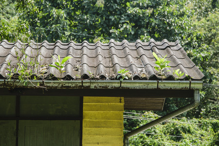 Trees on roofs, when you dont clean your rain gutters. Stock Photo