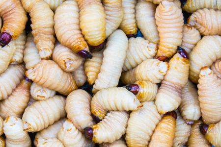 パーム イネミズゾウムシ幼虫、タンパク質や鉄の食用昆虫のソース 写真素材