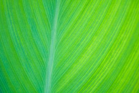 green leaf closeup background shallow DOF
