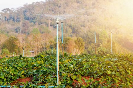 Sprinkler irrigation system used to watering in the smart farm Reducing time, increasing yields