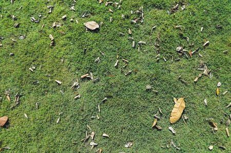 Dry leaves fall onto the green fields background