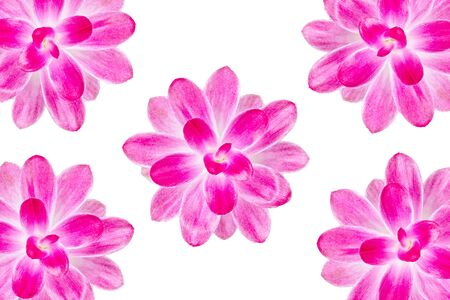 Background of pink flowers copy-space isolated on white background