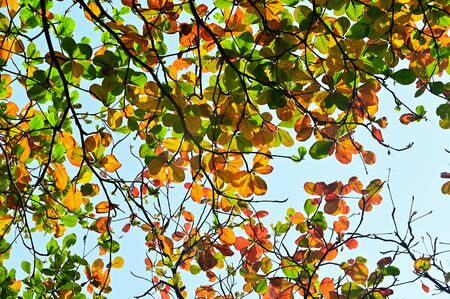 ColorFul Autumn leaves under tree nature background