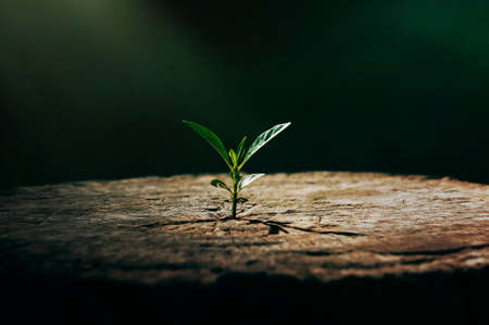 New life growth future innovation concept ,a strong seedling growing in the old center dead tree ,Concept of support building a future focus on new life with seedling growing sprout