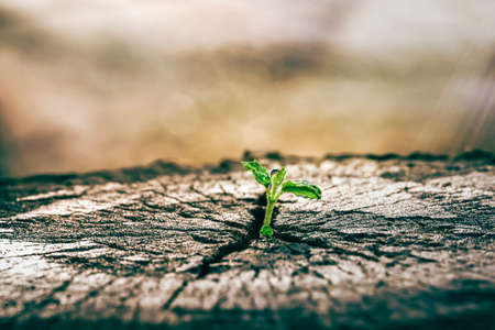 A strong seedling growing in the old center dead tree ,Concept of support building a future focus on new life with seedling growing sprout,New life growth future concept