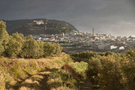 views from an olive grove of the city of Estepa. Andalusia, Spain