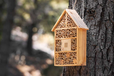 wooden box that serves as a house and hohar for insects in the field in a Mediterranean forest in Malaga. Andalusia, Spain 版權商用圖片