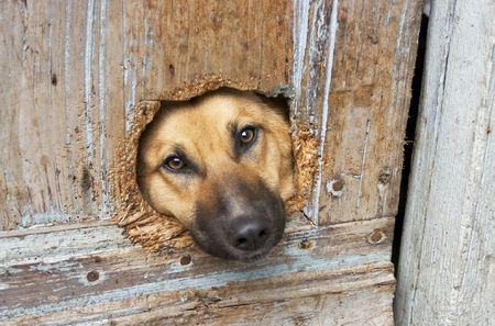 perro triste: triste perro
