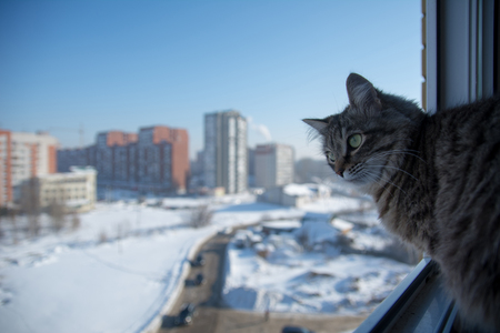 Domestic cat on the balcony looks at the street