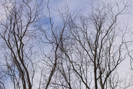 bare branches tree and blue sky