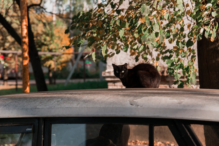A black cat sits on the roof of an old car