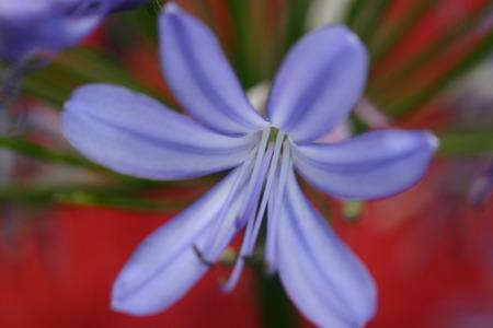 Blue Flower Фото со стока