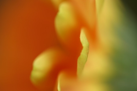 Orange Gerbera Daisy with Creative Use of Blur
