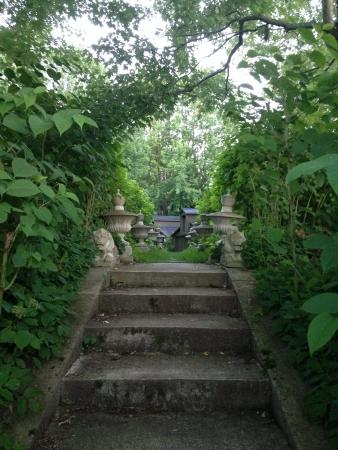 over grown: Stone over grown garden