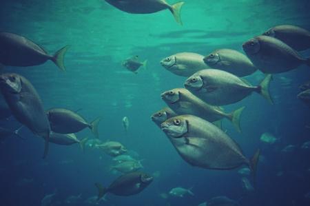 school of fish: School of Fish