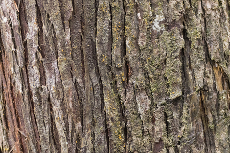 naturaleza: TEXTURE OF GREEN TREE GREEN, OLD AND BEAUTIFUL Stock Photo