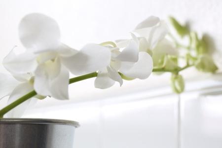 white flowers in tin pot