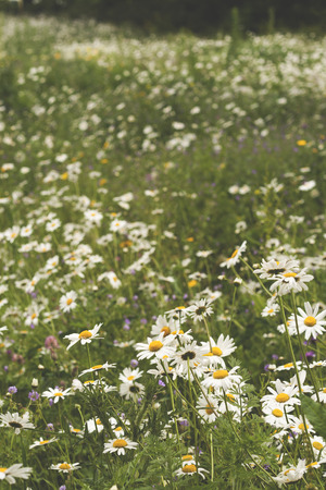 baclground: springtime field with flowers, vertical image Stock Photo