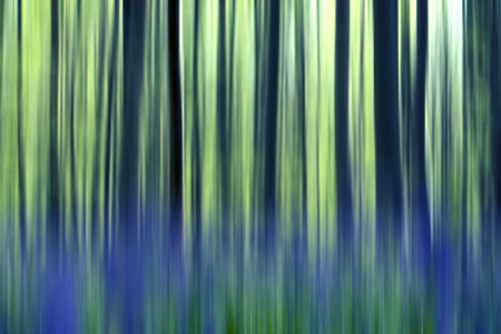 bluebells: springtime abstract landscape in belgium