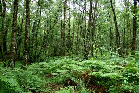Paimpont legendary forest, Broceliande, Brittany, France