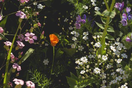 Colorful springtime flowers growing wild