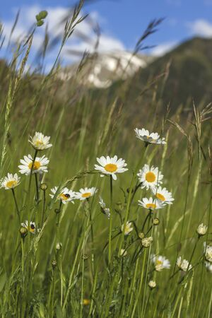 wild flowers in the mountains
