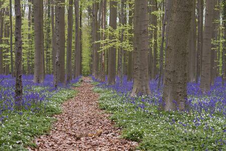 Springtime landscape in the blue forest