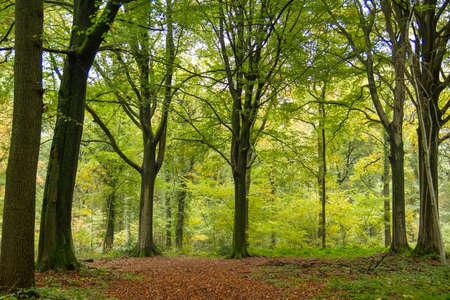 Deciduous woodland landscape in autumn