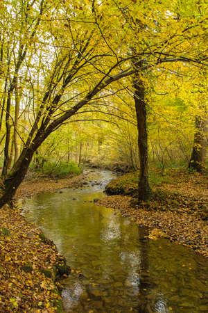 Deciduous woodland landscape in autumn Stockfoto