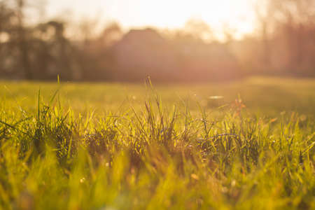 Green grass in the countryside Stock Photo