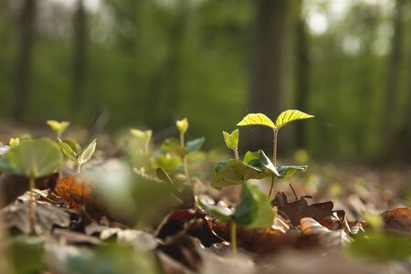 Wild green vegetation growing in the forest
