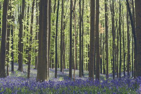 Frühling im blauen Wald Standard-Bild
