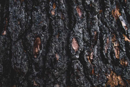 Detail of burned tree trunk after a wildfire Imagens