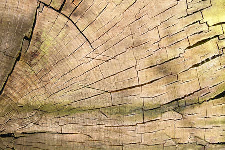 Old cracked wooden log texture